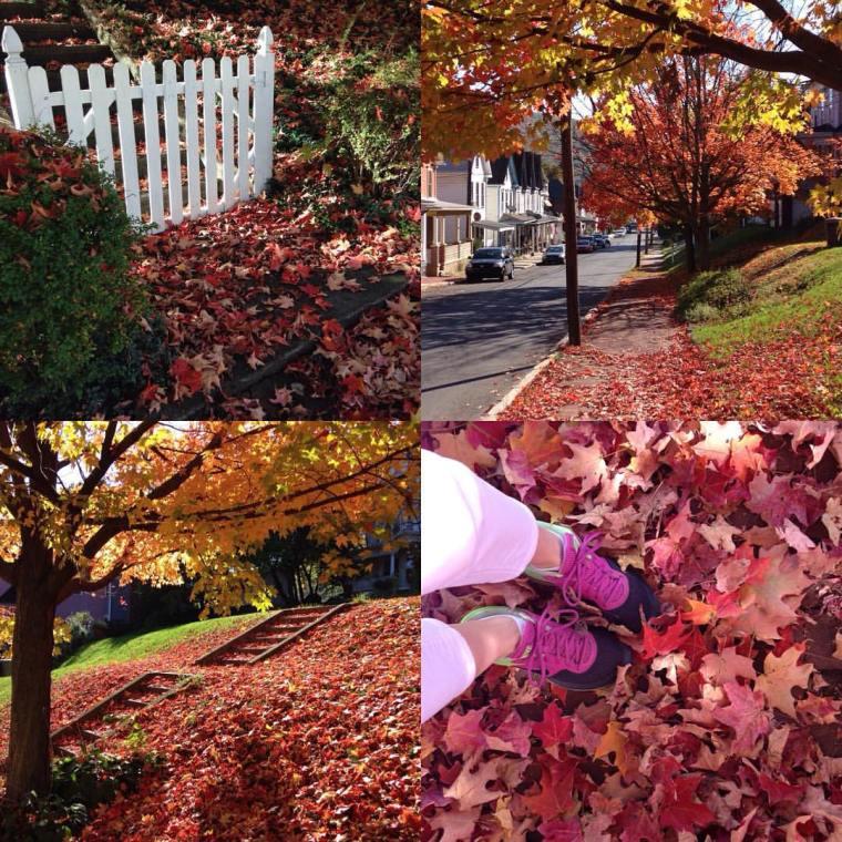fall.image.NBG